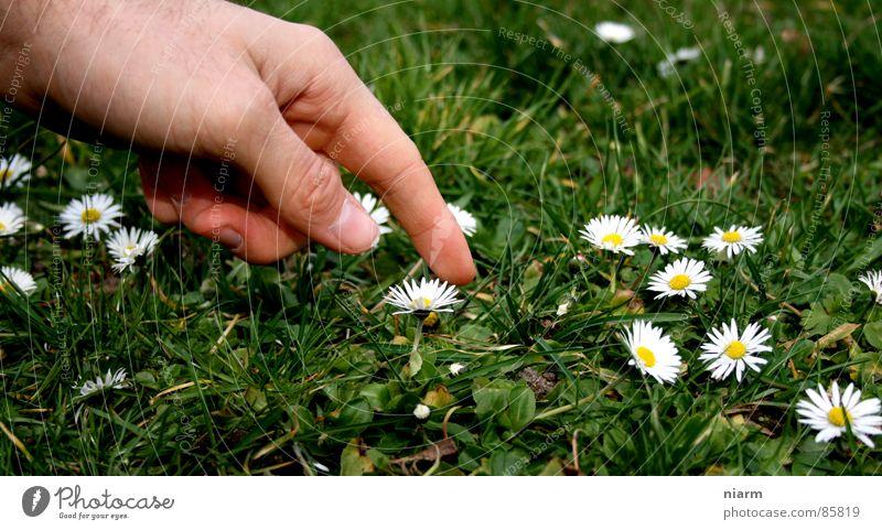 Blümchenfotografie 1 Natur Hand grün schön Blume Wiese Frühling Gras Blüte Finger Streifen Schönes Wetter Rasen berühren Kitsch Kontakt