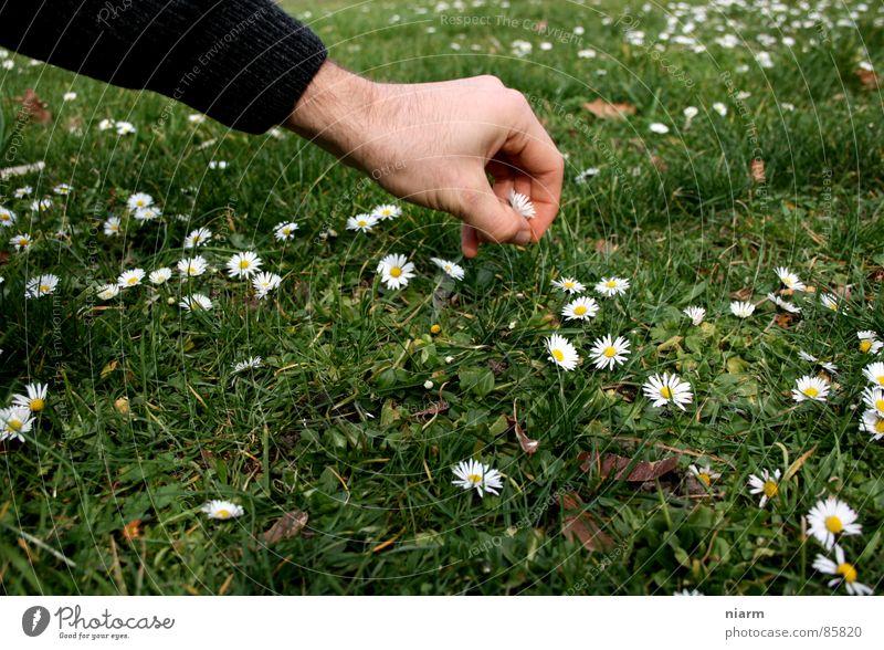 Blümchenfotografie 2 Natur Hand grün schön Blume Wiese Frühling Gras Blüte Streifen Schönes Wetter Rasen berühren Kitsch Kontakt Blumenstrauß