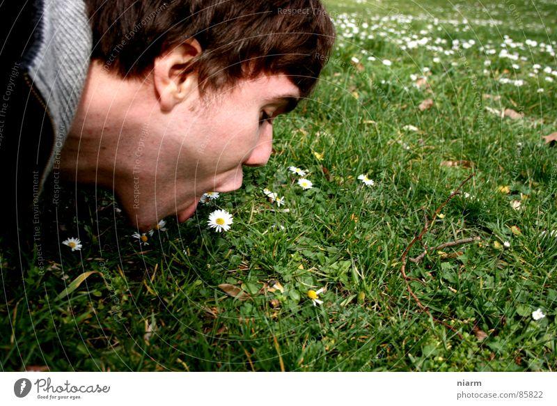 Blümchenfotografie 4 kulinarisch Wiese grün Gans Gänseblümchen Frühling März April Mai Blüte Blume Blumenwiese schön Kitsch Alm Gras Zärtlichkeiten Bergwiese