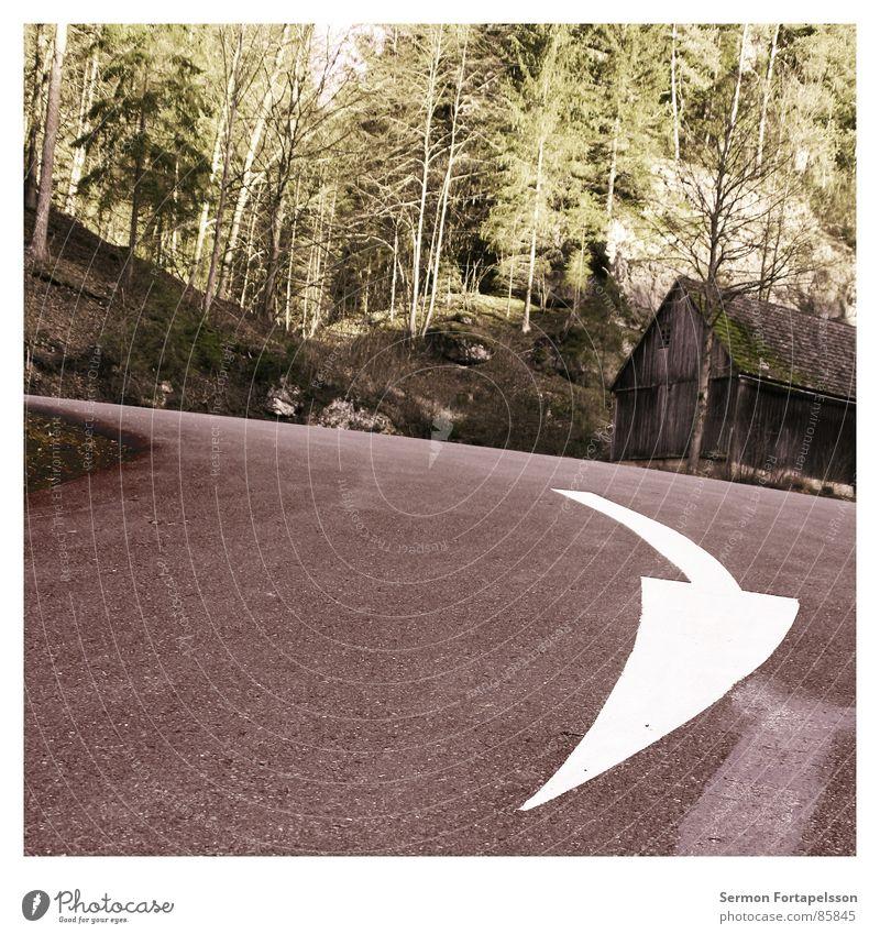 weg hier Haus Straße Farbe Wald Herbst Holz Wege & Pfade Linie fahren vorwärts Pfeil Richtung Straßenbelag Teer Mark abbiegen