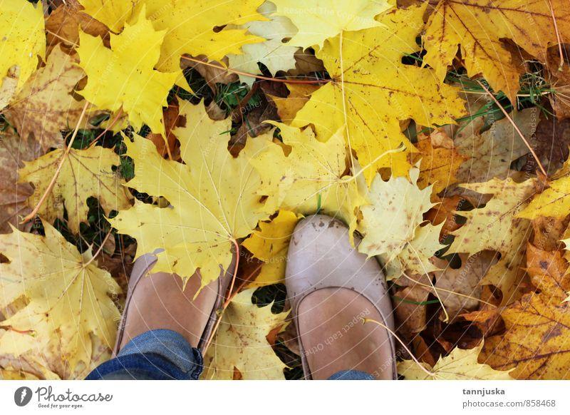 Herbst Natur Baum Blatt Garten Park Wald Erholung herbstlich gelb Orange Fuß laufen Parkplatz Stimmung Farbfoto mehrfarbig Außenaufnahme Tag