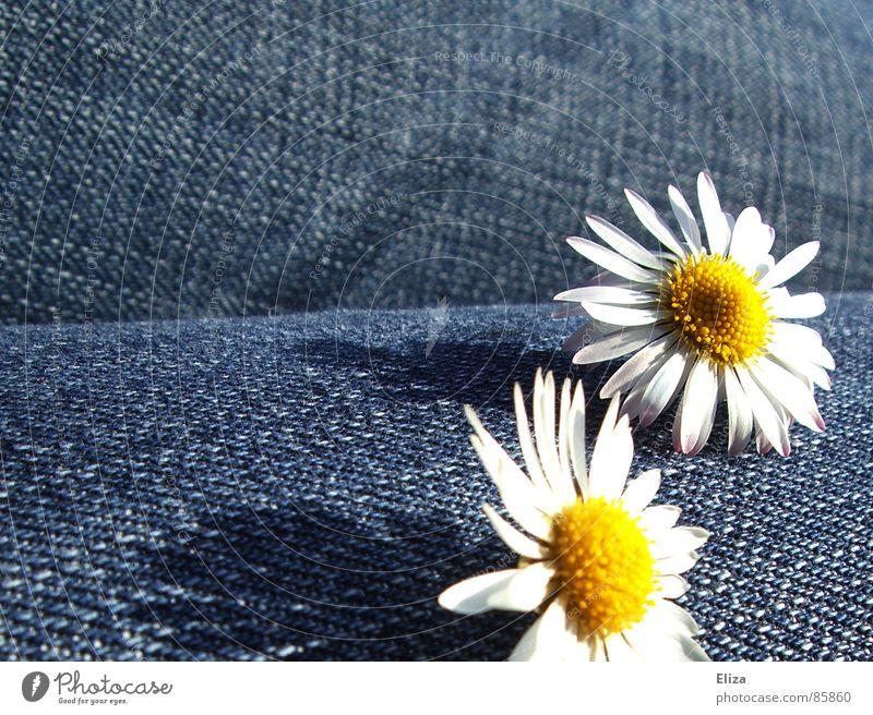 Wir genießen die Aussicht... Gänseblümchen Blume Frühling Hose Sommer Glück Fröhlichkeit Blüte heiter Oberschenkel Spielen schön süß niedlich Jeanshose