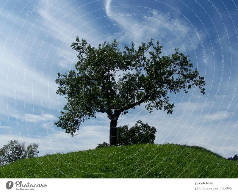Dynamik Natur Himmel grün Sommer Wolken Wiese Gras Landschaft Rasen Laubbaum Cirrus