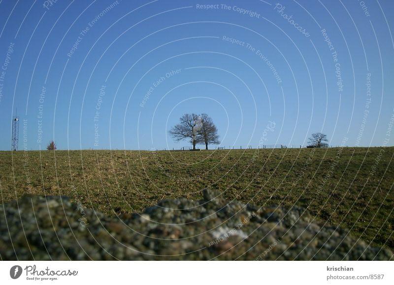 Ein Baum Natur Landschaft