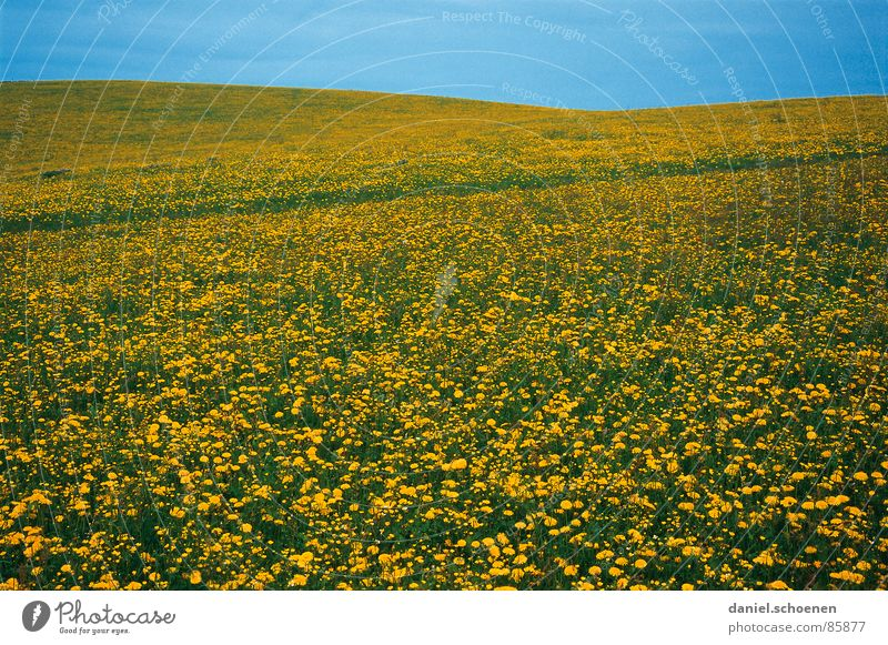 Frühling !!! schön Himmel Blume grün Sommer Wolken gelb Erholung Wiese Blüte Gras Frühling Hintergrundbild Wetter Horizont Pause