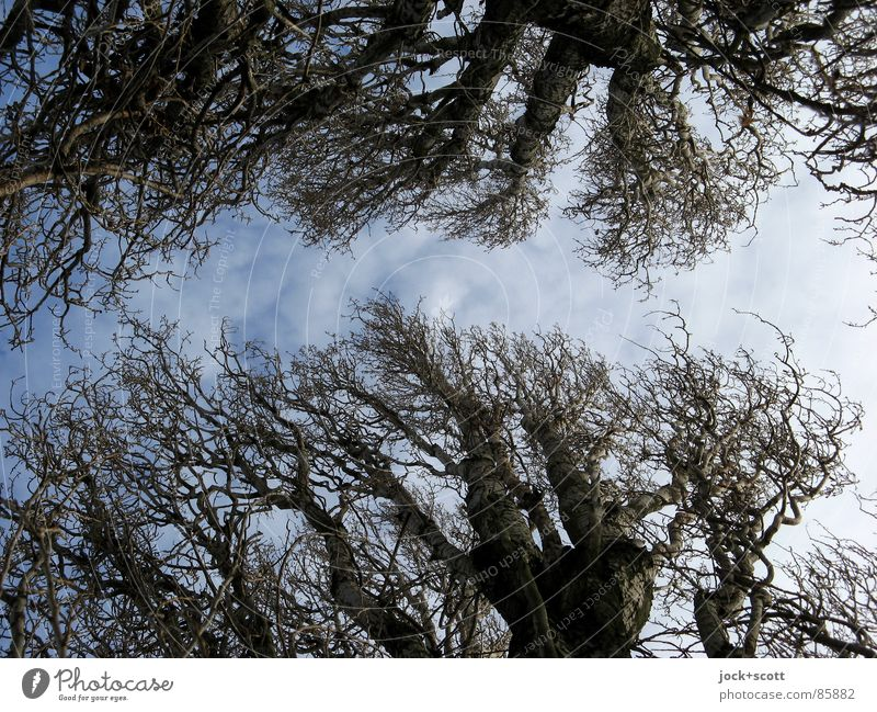 Bäume des Jahres Himmel Natur alt Holz Linie Wetter Ordnung Kraft Wind Spitze Ast Baumstamm Zweig dick Botanik