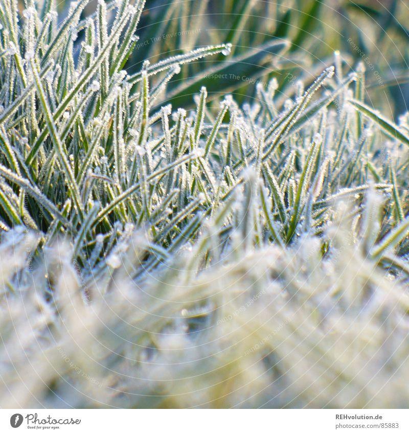 frozen gras aufstehen Wiese Gras frieren grün kalt Morgen Raureif Eis Winter Garten Park gefrierpunkt kalt. halme Rasen Frost warm anziehen xxee Schnee