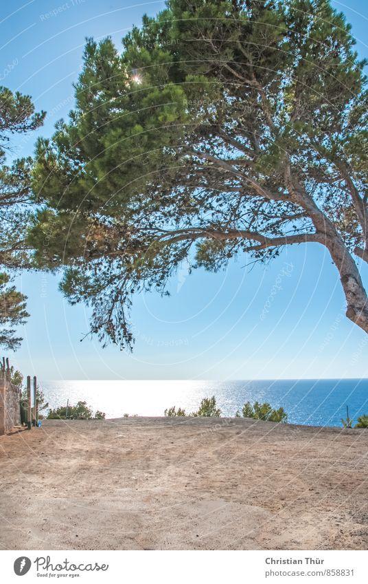 Meerblick Spanien Mallorca Natur Wasser Sonne Baum Erholung Ferne Schwimmen & Baden Freiheit Zufriedenheit Tourismus wandern Insel Ausflug Schönes Wetter