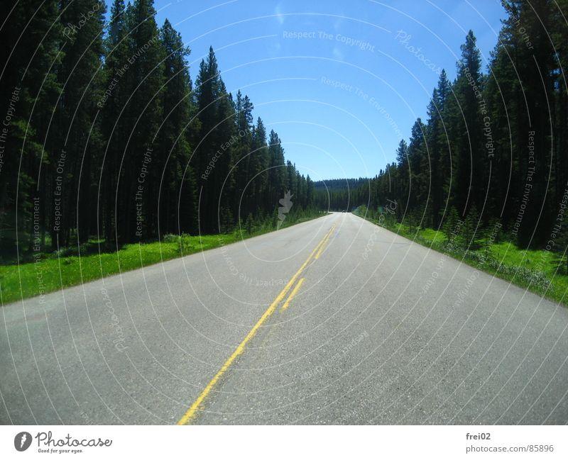 So weit das Auge reicht Straße Wald Straßenverkehr Autobahn Verkehrswege Straßenbelag Teer Landstraße Fernstraße