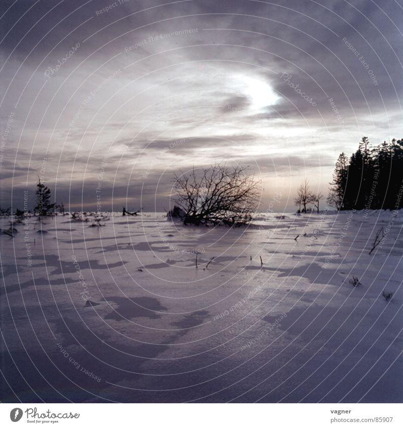 Winter Wolken Wald Schnee Abenddämmerung Sonnenuntergang Eischnee