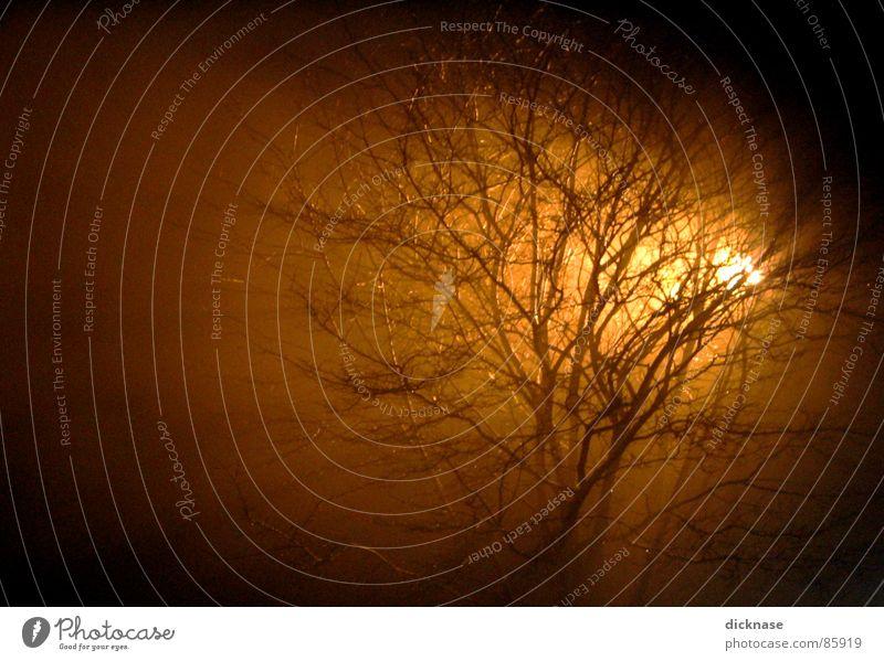 glow on me... schön Baum Stimmung Raum Nebel Ast Rauch Belichtung Wiederholung glühen verzweigt Wochenende Franken zuletzt Coburg