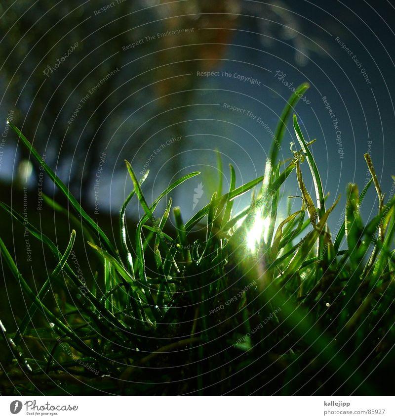 froschperspektive grün Pflanze Wiese Gras Frühling Wachstum Bodenbelag Sträucher Rasen Landwirtschaft Froschperspektive Weide Sportrasen Halm Botanik