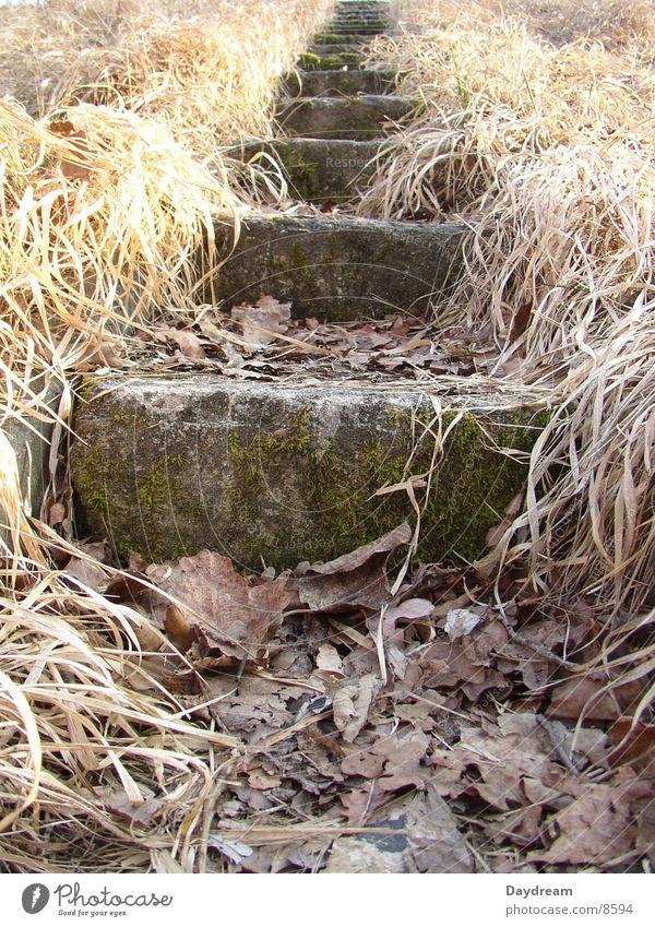 Stairs to... Blatt Gras Stein Treppe
