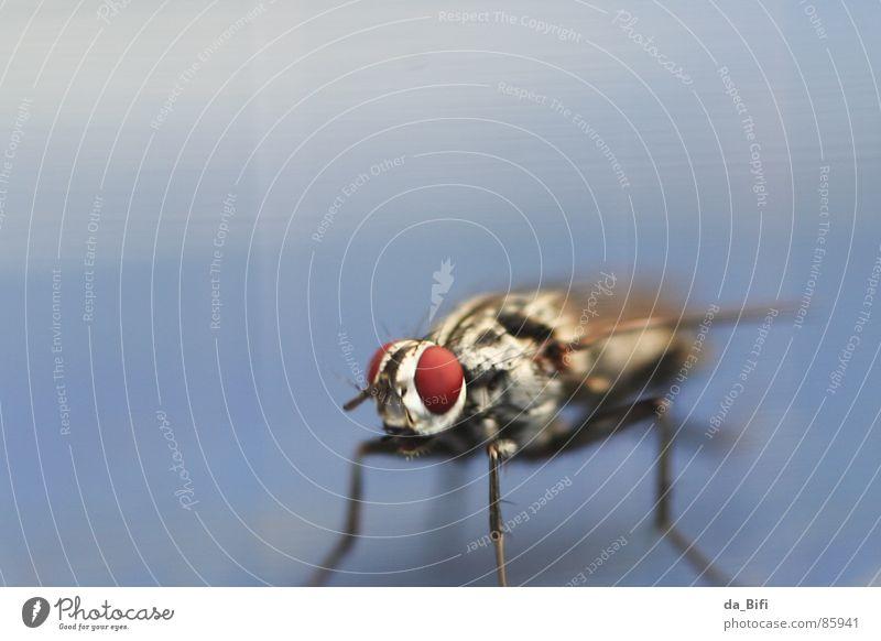 zebra? Natur rot Tier Auge klein Beine fliegen außergewöhnlich groß Fliege Streifen Flügel nah lang Insekt