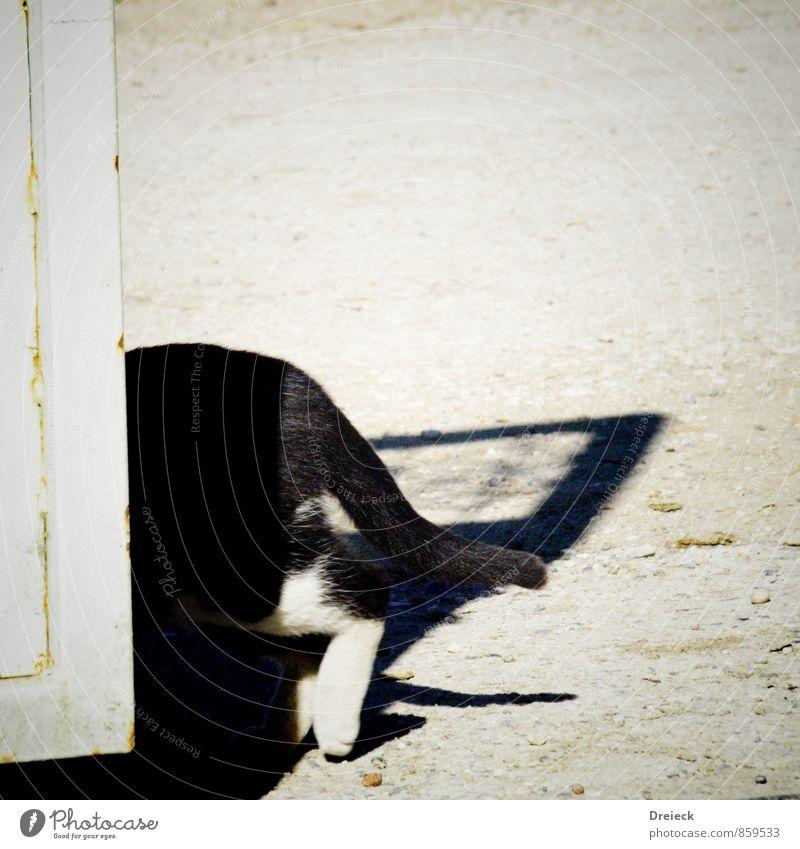 ...bin dann mal weg Katze weiß Tier schwarz Bewegung gehen Fell Haustier Pfote