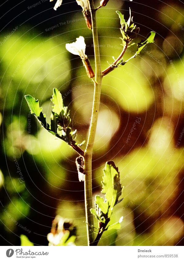 shiny grow Umwelt Natur Pflanze Sonne Frühling Sommer Blume Sträucher Blatt Grünpflanze Wildpflanze Garten Park Wiese Wald Wachstum Duft natürlich gelb gold