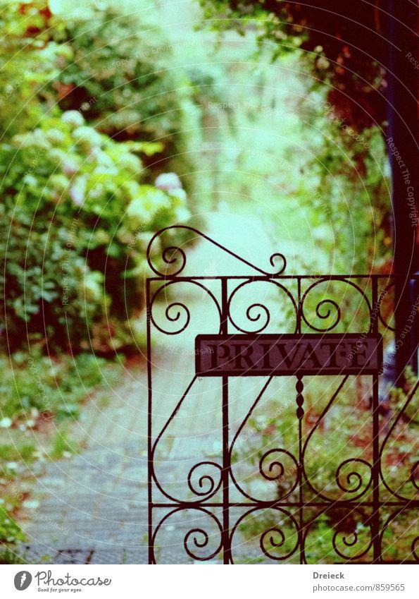 Nicht öffentlich Natur Pflanze Frühling Sommer Blume Gras Sträucher Blatt Grünpflanze Garten Tor Tür Stein Metall Stahl Rost Zeichen Schriftzeichen