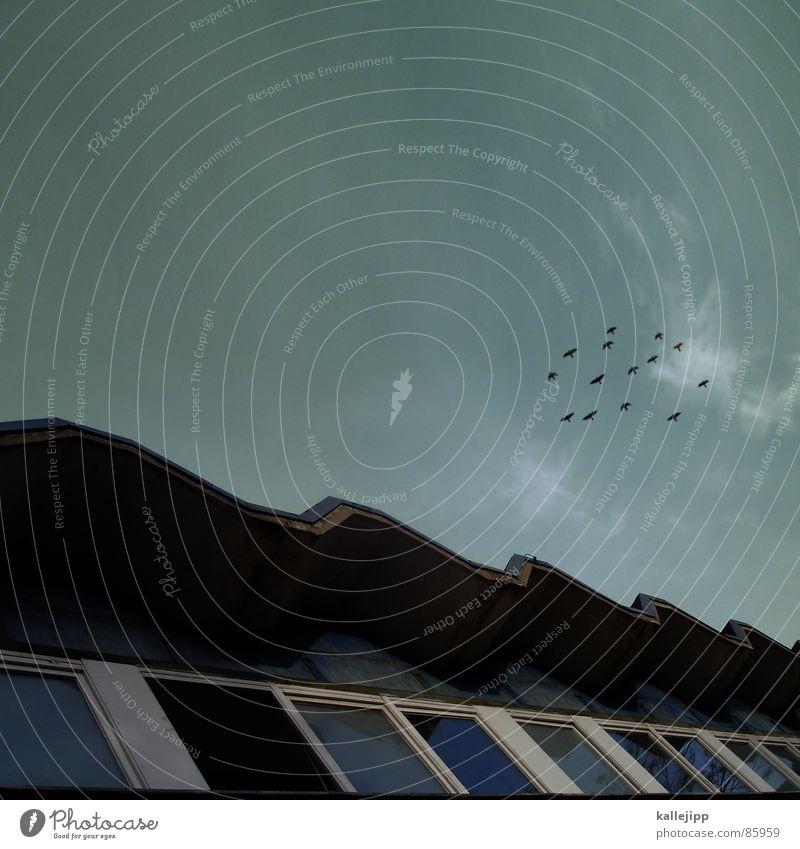 mein lieber herr gesangsverein Himmel Natur Tier Umwelt Fenster Architektur Vogel Zusammensein mehrere Dach Schulgebäude Zusammenhalt DDR singen Schwarm Osten