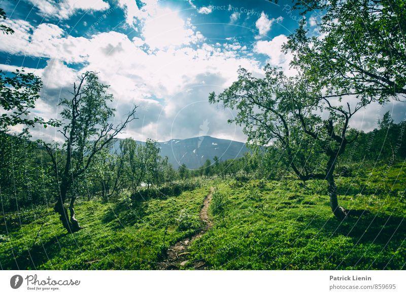 Mückenparadies Zufriedenheit Sinnesorgane Erholung ruhig Abenteuer Ferne Freiheit Expedition Sommer Berge u. Gebirge wandern Umwelt Natur Landschaft Pflanze