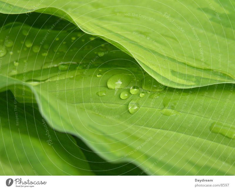 Tropfen Wasser grün Blatt Regen Sträucher