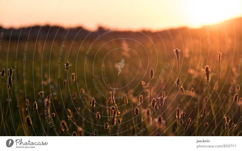 Abendstimmung Umwelt Natur Landschaft Pflanze Urelemente Erde Himmel Horizont Sonne Sonnenaufgang Sonnenuntergang Sonnenlicht Sommer Schönes Wetter Gras