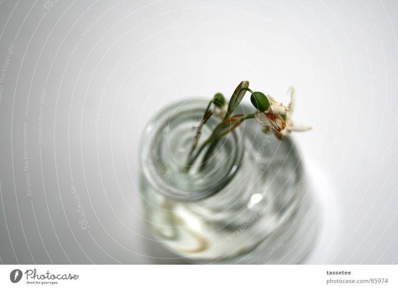 Überlebenskampf weiß Blume Frühling Glas Trauer einfach Klarheit Schneeglöckchen