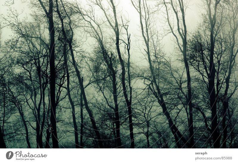 Sturm Natur Pflanze Baum ruhig Traurigkeit Bewegung grau Stimmung Wetter trist Wind Ast Trauer Baumstamm Zweig Baumkrone