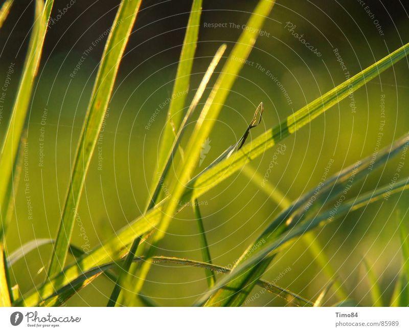 Hoffnung grün Sommer Freude Wiese Gefühle Gras Begeisterung resignieren