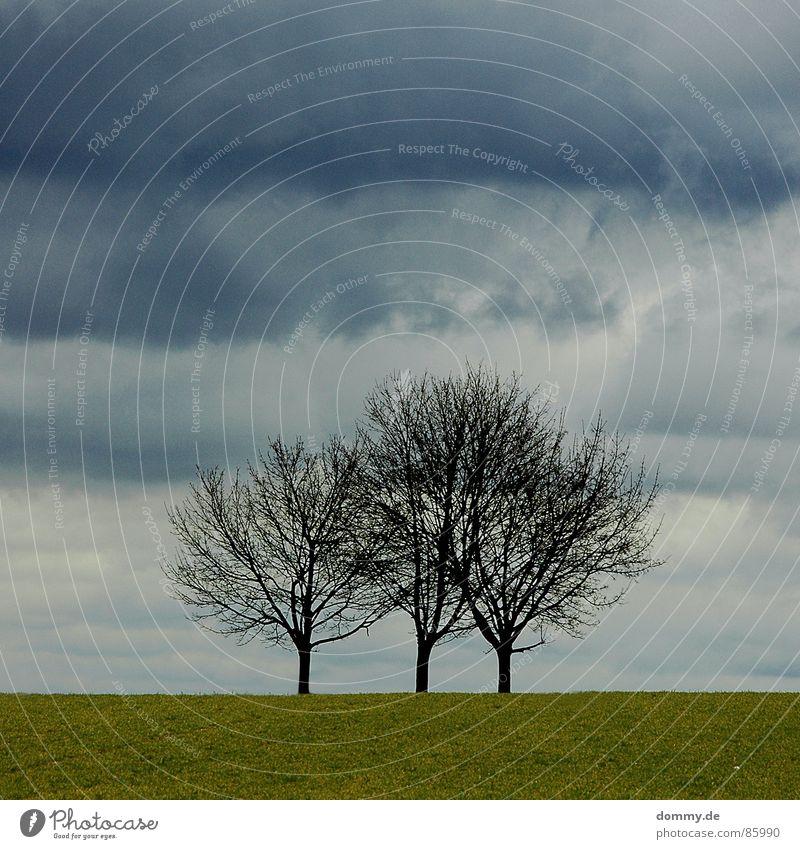 threetree 3 Gras Wiese Spielen spielend Morgen Wolken dunkel drücken Unwetter Winter zugezogen wolkenbehangen Amerika Gewitter Abend Schicksal Natur Regen Wind