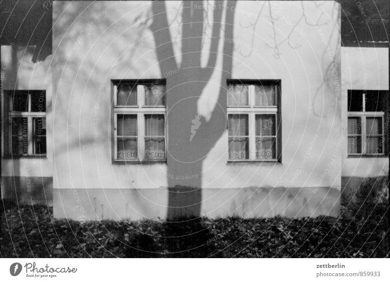 Falkenberg Haus Wohnhaus Wand Mauer Altbau Fenster Aussicht Außenaufnahme Detailaufnahme Fensterkreuz Baum Baumstamm Ast Schatten Licht Sonne Symmetrie trist