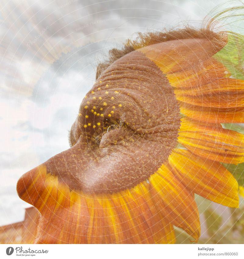 so nen´bart Mensch maskulin Mann Erwachsene Gesicht Auge 1 30-45 Jahre Umwelt Natur Himmel Pflanze Blume Blühend nachhaltig Sonnenblume Sommer grün Farbfoto