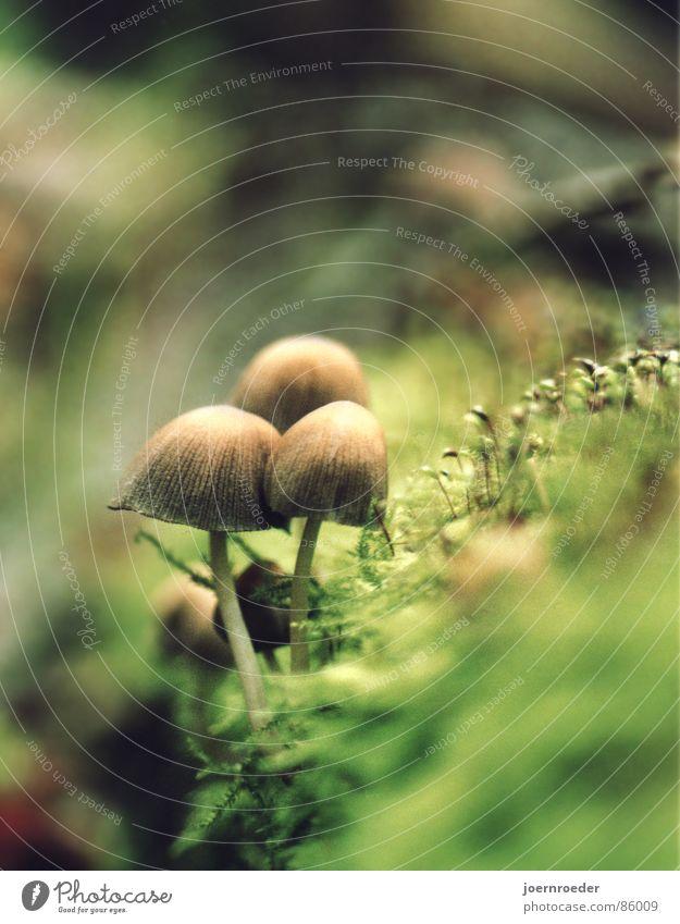 Die Drei am Abgrund Moos braun grün Waldboden Herbst Waldwiese Gras Verkehr Drei Pilze am Rand eines Baumstammes Bodenbelag
