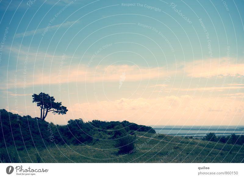 Hiddensee II Natur Ferien & Urlaub & Reisen blau grün Sommer Baum Meer Einsamkeit Erholung Landschaft ruhig Ferne dunkel Gras Wege & Pfade Freiheit