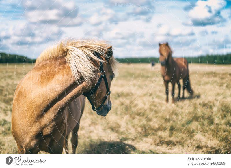 Don't look back harmonisch Wohlgefühl Zufriedenheit Freizeit & Hobby Ausflug Freiheit Sommer Reitsport Umwelt Natur Landschaft Himmel Wiese Tier Nutztier Pferd