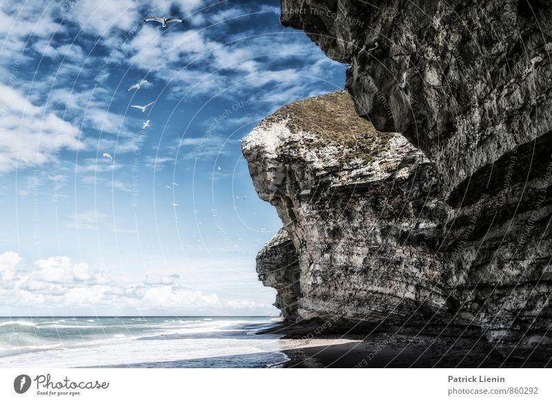 Escape Natur Ferien & Urlaub & Reisen Sommer Erholung Meer Ferne Strand Umwelt Küste Freiheit Vogel Felsen Zufriedenheit Tourismus Wellen Wildtier