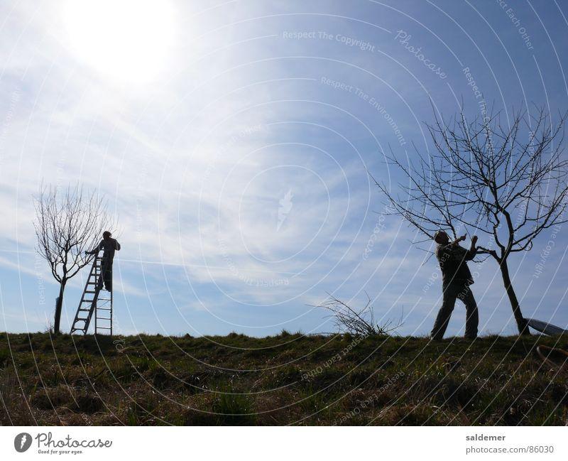 Frühjahrsschnitt geschnitten Mann Obstbaum Junger Mann Trittleiter Handwerk Landschaftsgärtner Gehölzschnitt Sonne Himmel Leiter kürzen