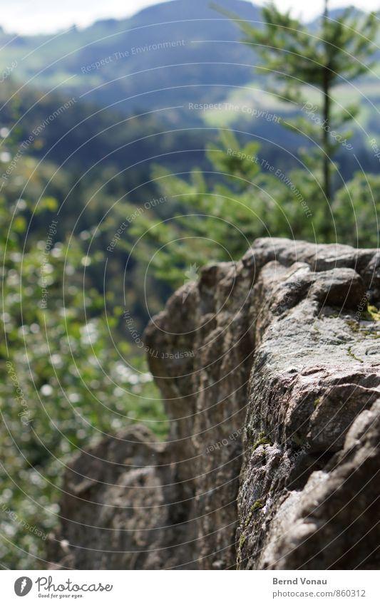 Schauinsland Sommer Baum Wald Felsen Berge u. Gebirge Schwarzwald blau grau grün Felsvorsprung Tanne Blatt Aussicht Freizeit & Hobby wandern steil hart