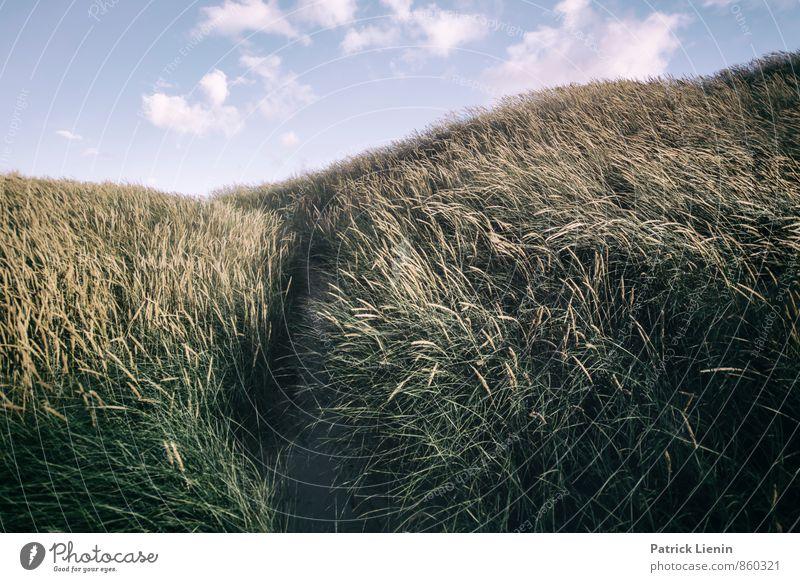 Day in the Dunes V Himmel Natur Ferien & Urlaub & Reisen Pflanze Sommer Sonne Erholung Landschaft Ferne Umwelt Wärme Leben Freiheit Sand Zufriedenheit Erde