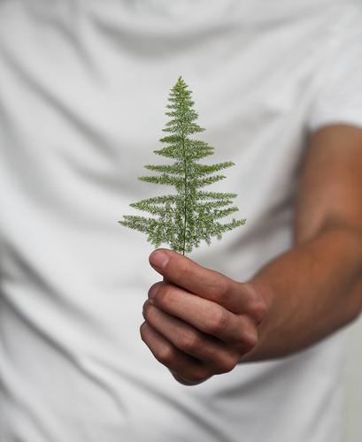 nimm´s an Mensch maskulin Hand Finger 1 Pflanze Baum Gras Natur geben schenken stoppen Geschenk Tanne Farbfoto Außenaufnahme Nahaufnahme Detailaufnahme