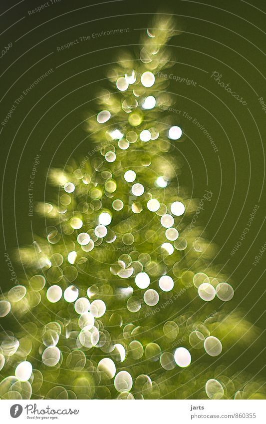 frohe weihnachten Natur Weihnachten & Advent Pflanze Baum glänzend elegant Zufriedenheit frisch Fröhlichkeit Weihnachtsbaum