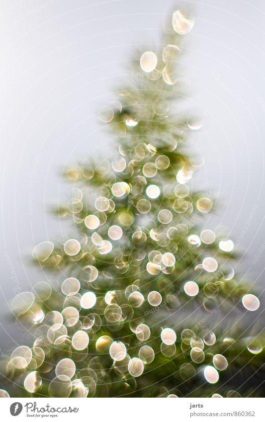 lichterbaum 2 Weihnachten & Advent Wassertropfen Winter Pflanze Baum Fröhlichkeit Zufriedenheit Vorfreude Tannenbaum Licht Farbfoto Außenaufnahme Nahaufnahme