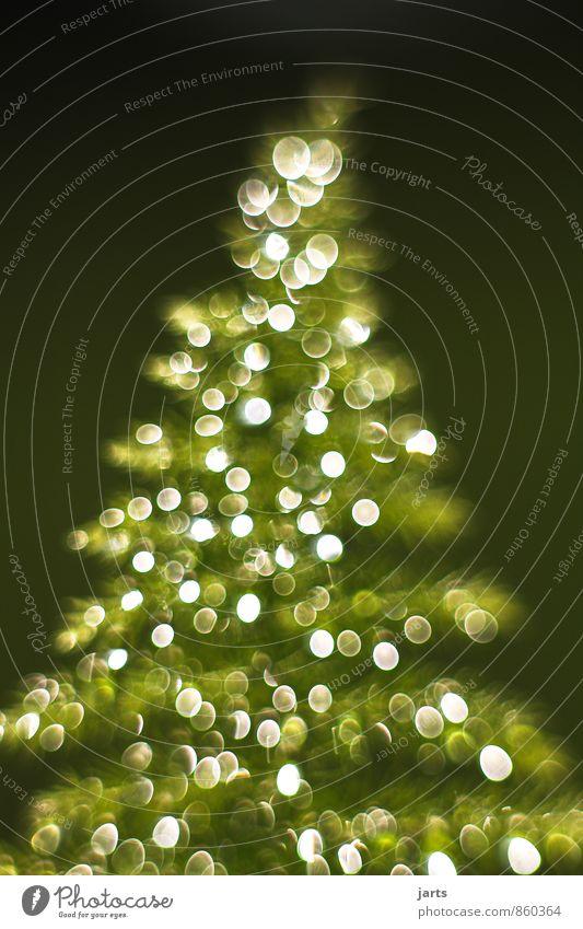lichterbaum 1 Pflanze Weihnachten & Advent Baum Winter Zufriedenheit Fröhlichkeit Wassertropfen Vorfreude