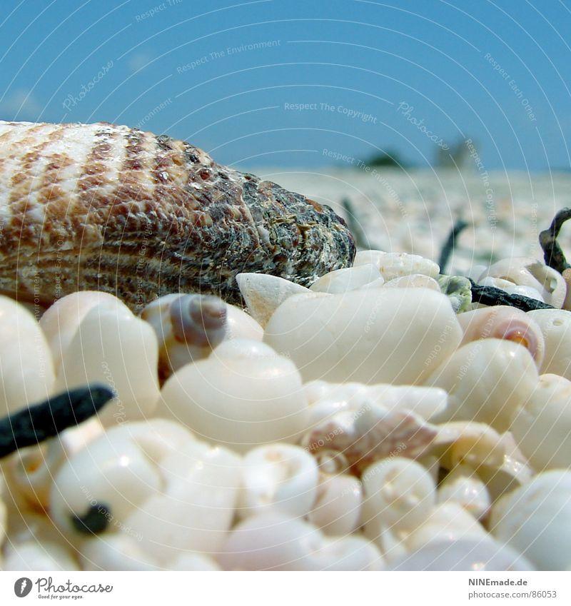 Versammlung ... Himmel blau Wasser weiß Sommer Meer Strand Einsamkeit ruhig Erholung Wärme Küste klein braun rosa Klima