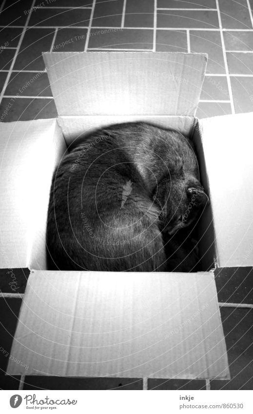 Platz ist in der kleinsten Hütte Erholung ruhig Tier Ferne Gefühle klein liegen Häusliches Leben Zufriedenheit niedlich schlafen Pause Schutz Innerhalb (Position) Müdigkeit Haustier
