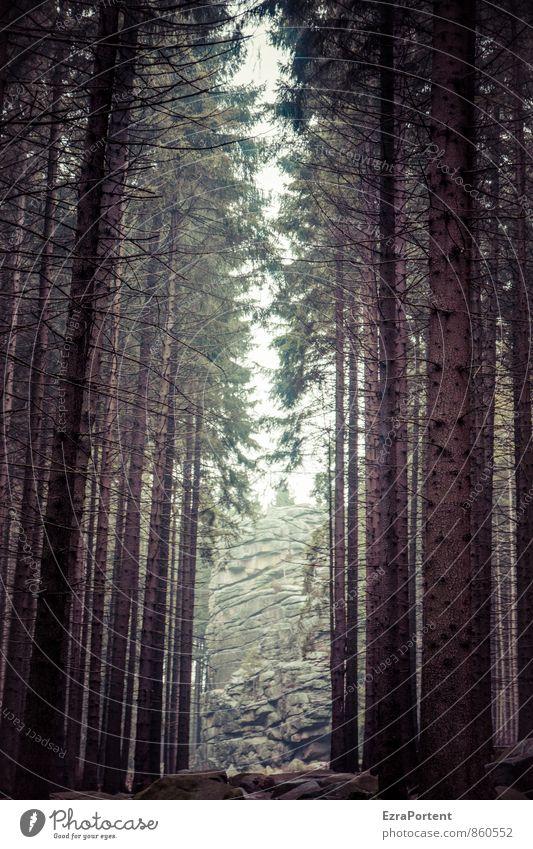 Ausweg Ferien & Urlaub & Reisen Tourismus Ausflug Abenteuer Freiheit Umwelt Natur Landschaft Frühling Sommer Herbst Pflanze Baum Wald Felsen Berge u. Gebirge