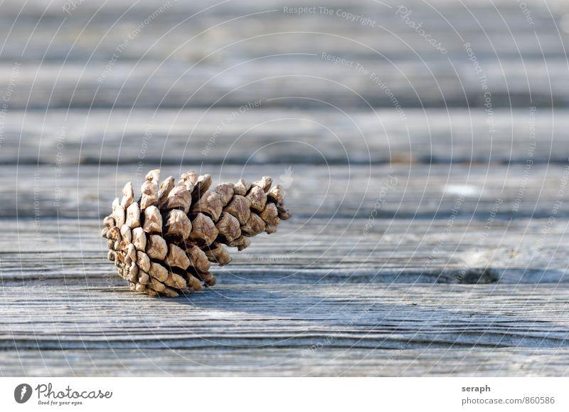 Zapfen Kiefer Pine Tree Arch Kiefernnadeln cone knotig natürlich organisch pinus fir Samen Konifere Nadelbaum Dekoration & Verzierung Makroaufnahme Feiertag