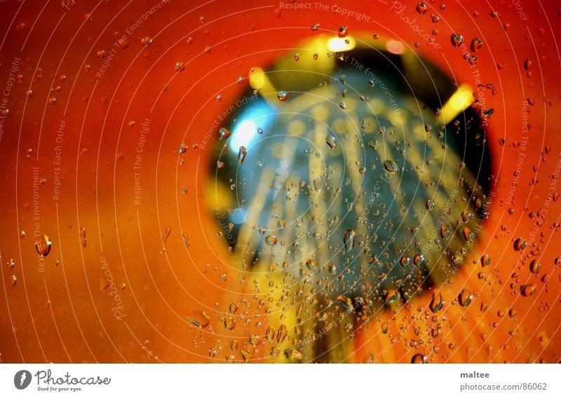 take a shower Wasser Freude orange Glas nass Bad Dusche (Installation) feucht spritzig wasserdicht Duschkopf Sturzbach aquatisch Sprühwasser Wasserschwall