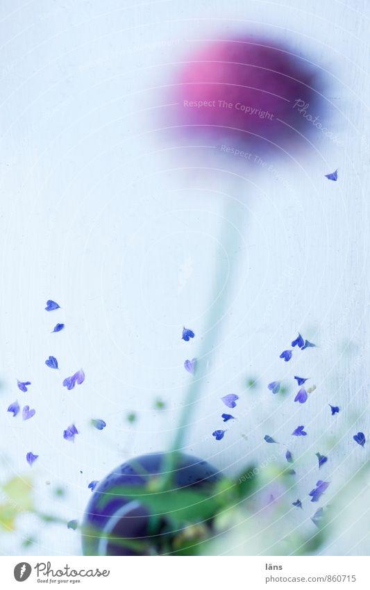 wo die liebe hinfällt ll Pflanze schön Blume Gefühle Liebe Blüte natürlich Glück Zufriedenheit Dekoration & Verzierung Herz Blühend Lebensfreude Hoffnung violett Leidenschaft