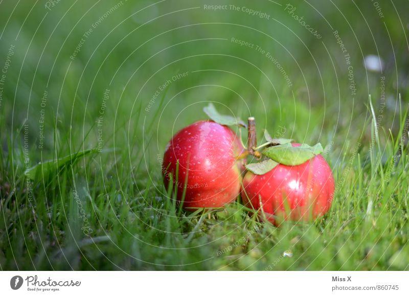 Lieblingsfoto 2014 Natur Sommer rot Wiese Herbst Gras klein Gesundheit Lebensmittel liegen frisch nass süß Apfel saftig Zwilling