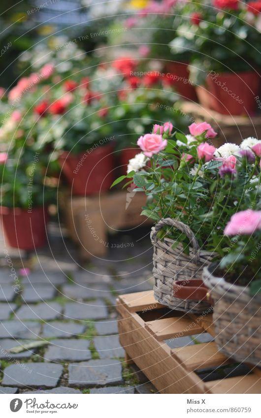 Rosen zum Valentinstag Blühend Duft verkaufen Rosengewächse Blumenhändler Blumenladen Farbfoto mehrfarbig Außenaufnahme Nahaufnahme Menschenleer